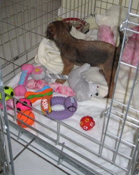 Kipster in her crate with her toys...