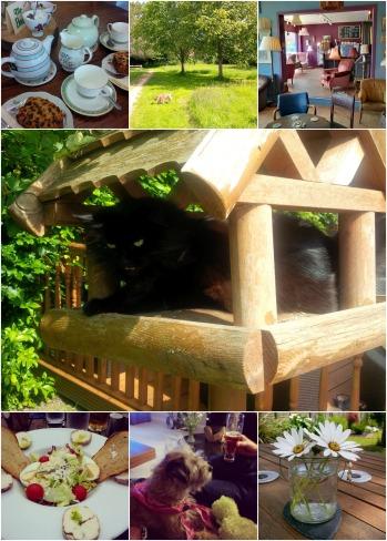 collage 9 June