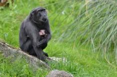 Monkey at Marwell zoo