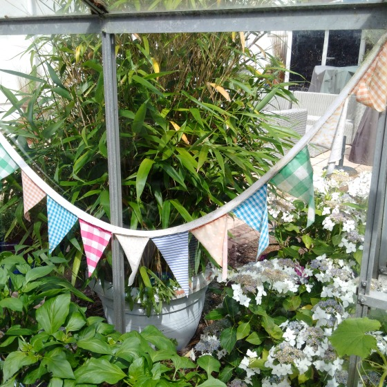 greenhouse bunting