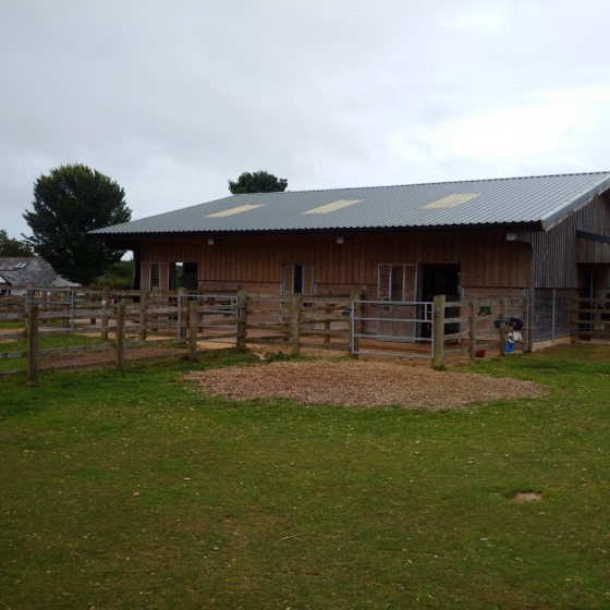donkey hospital