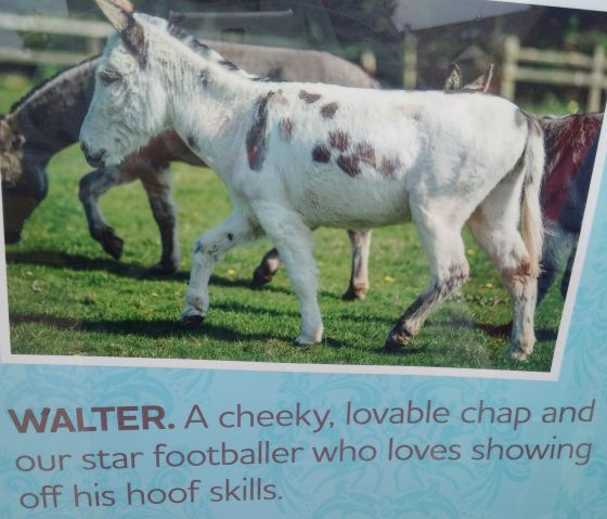 Walter the donkey