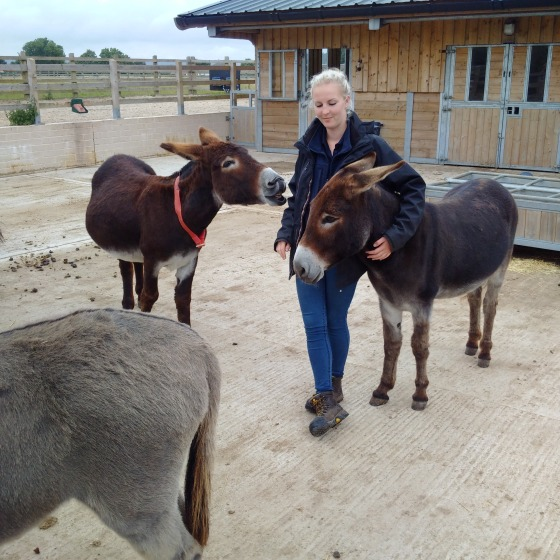 donkey groom