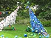 Larmer Tree 15 peacocks