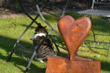 the mog and the heart