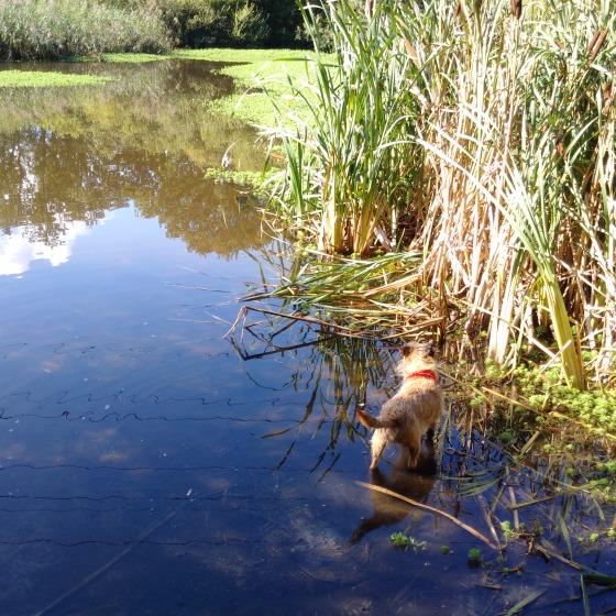 Kipster paddling