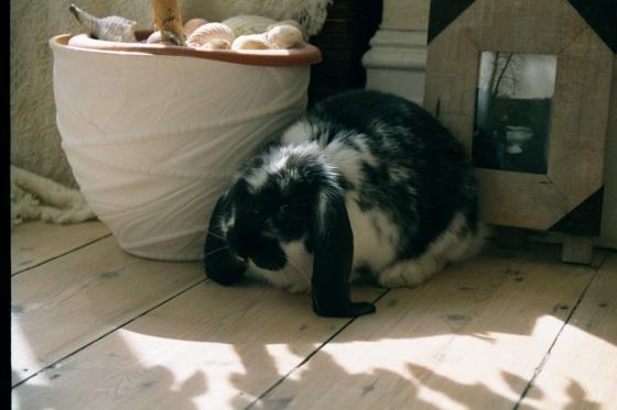 Bertie the bunny