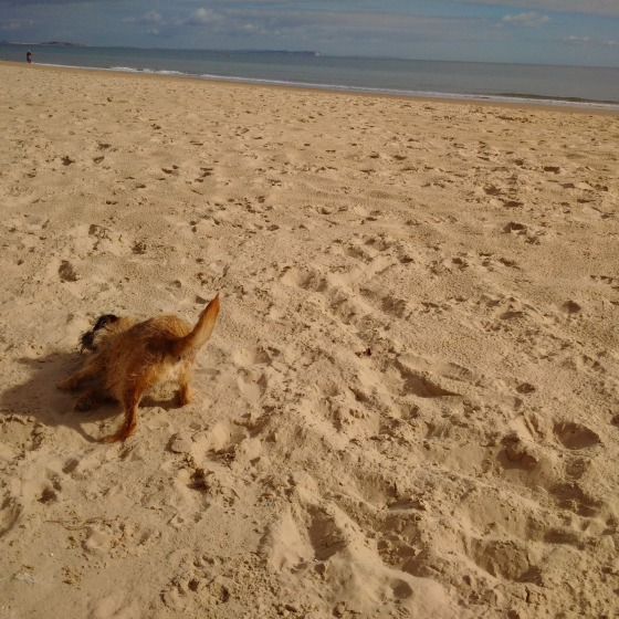 Kipster on the sand