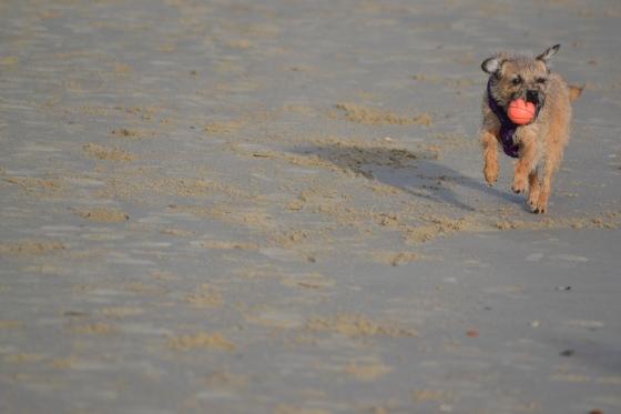 Kipster on the beach