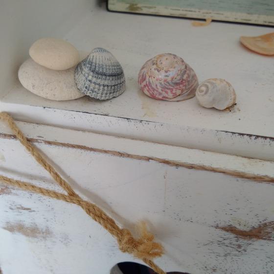 shells at the beach hut